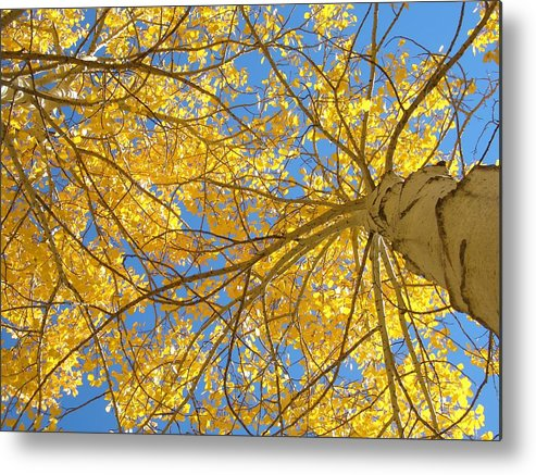 Aspen Metal Print featuring the photograph Blue And Gold II by Brian Anderson