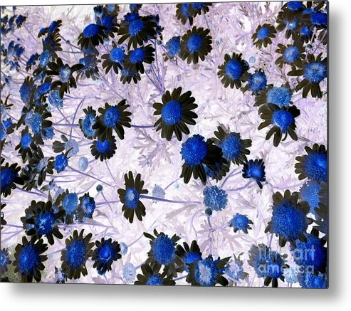 Original Metal Print featuring the painting Blue Daisy by Dawn Hough Sebaugh