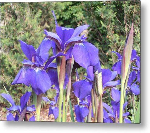 Peach Metal Print featuring the photograph Blue Sentry by Tim Donovan