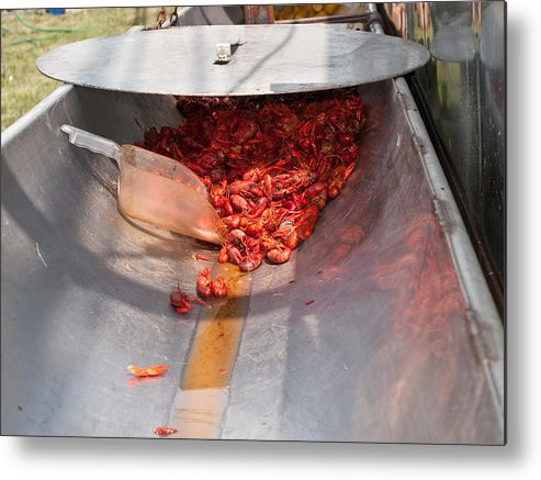 Crawfish Metal Print featuring the photograph Boiled Crawfish by Jim DeLillo