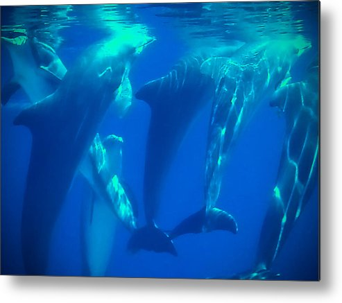 #dolphins #animals #dolphinsdance #mirage #lasvegas #marinelife #marine #sea #ocean #mammals #persephoneproductions Metal Print featuring the photograph Breathe by Persephone Productions