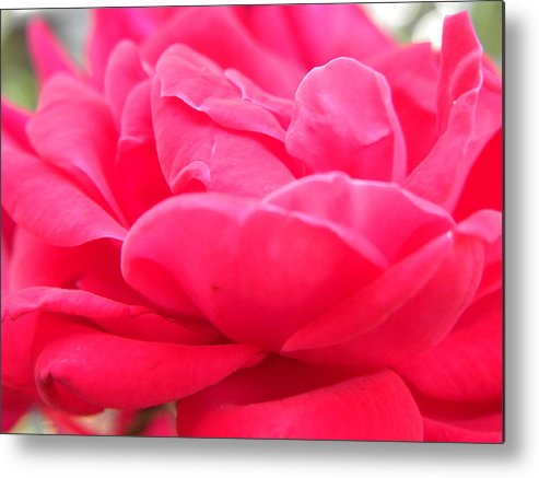 Nature Metal Print featuring the photograph Bright Pink by Shannon Turek