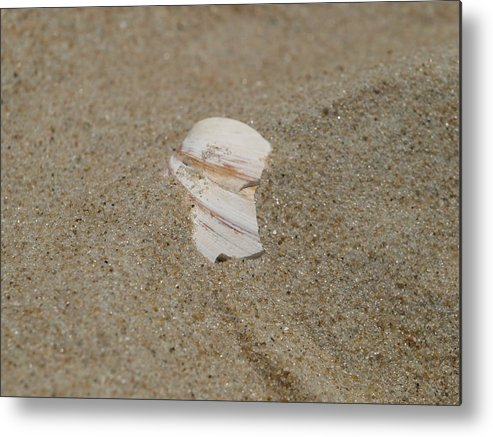Sand Metal Print featuring the photograph Broken Shell by Kim