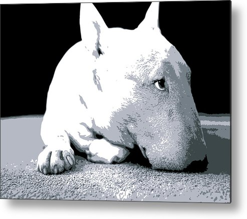 English Bull Terrier Metal Print featuring the digital art Bull Terrier White On Black by Michael Tompsett