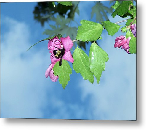 Bumble Bee Photography Metal Print featuring the photograph Bumble Bee 2 by Evelyn Patrick