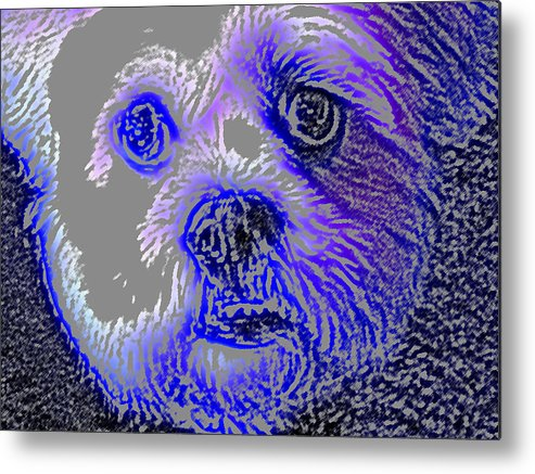 Dog Metal Print featuring the photograph Buster Photo by Wayne Potrafka