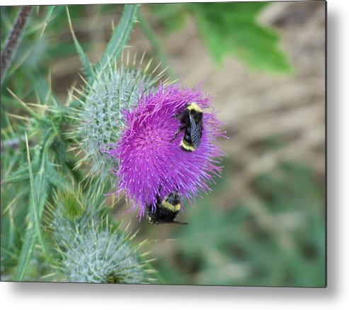 Flower Metal Print featuring the photograph Busy Bees by Gene Ritchhart