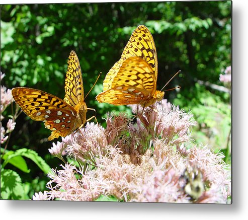 Nature Metal Print featuring the photograph Butterflies by Eric Workman