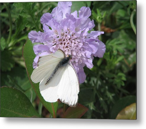 Butterfly Metal Print featuring the photograph Butterfly 3 by Mary Ivy