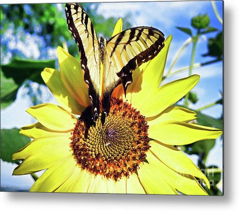 Flower Metal Print featuring the painting Butterfly Meets Sunflower by Linda M Gardner
