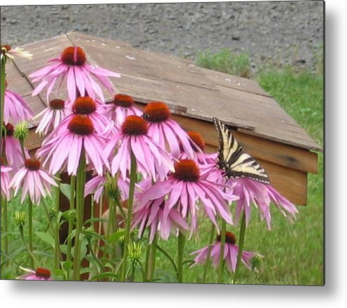 Metal Print featuring the digital art Butterfly's Lunch by Barb Morton