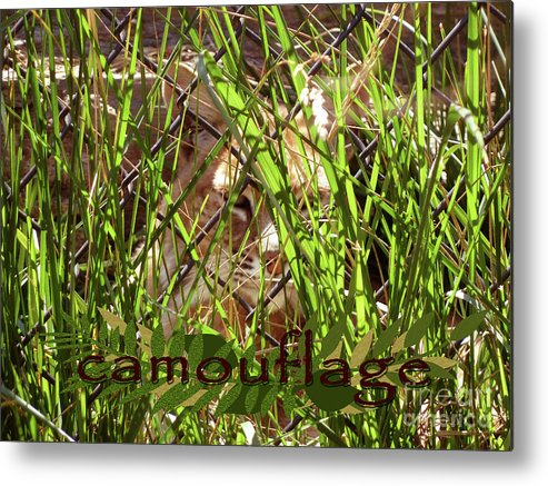 Camouflage Metal Print featuring the photograph Camouflage by Methune Hively