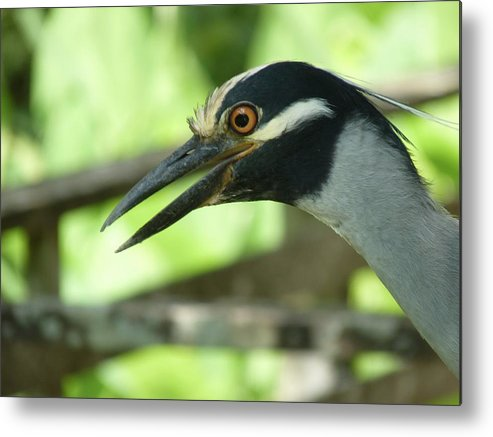 Bird Metal Print featuring the photograph Can We Be Friends by Jeanette Oberholtzer
