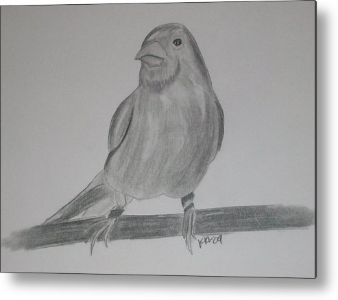 Bird Metal Print featuring the drawing Canary by Kristen Hurley
