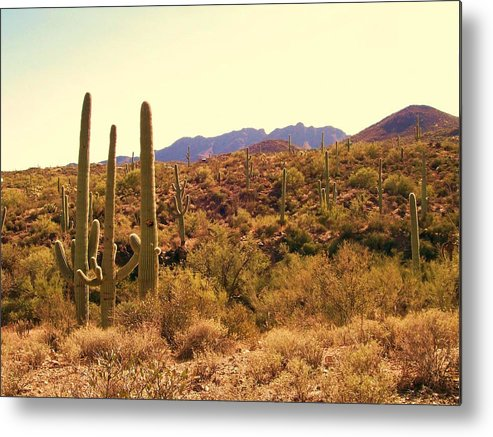 Saguaros Metal Print featuring the photograph Celebration by Kathleen Heese