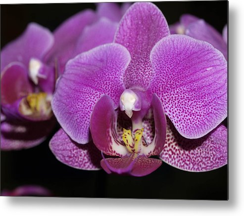 Orchids Metal Print featuring the photograph Center Of Attention by Joyce Hutchinson