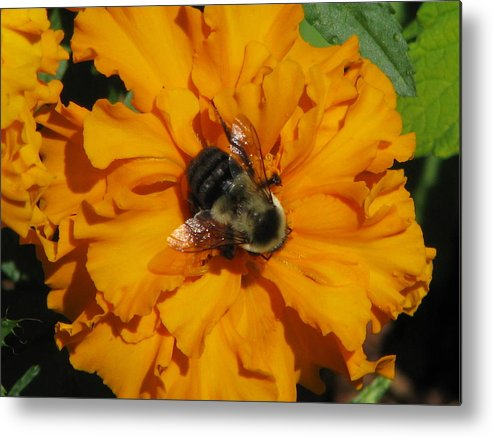 Flower Metal Print featuring the photograph Center Of Attention by Staci-Jill Burnley
