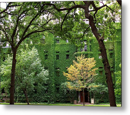Ivy Metal Print featuring the photograph Chicago Campus by Caroline Urbania Naeem