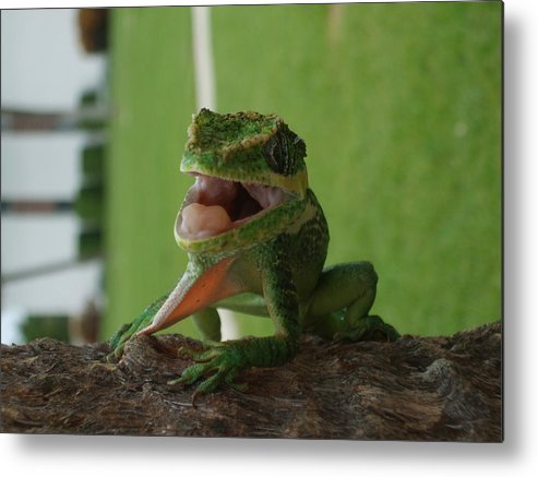 Iguana Metal Print featuring the photograph Chilling On Wood by Rob Hans