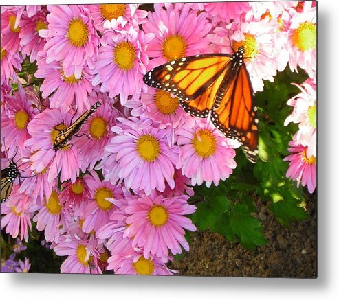 Butterfly Metal Print featuring the photograph Cliff House Butterflies by Heather Weikel