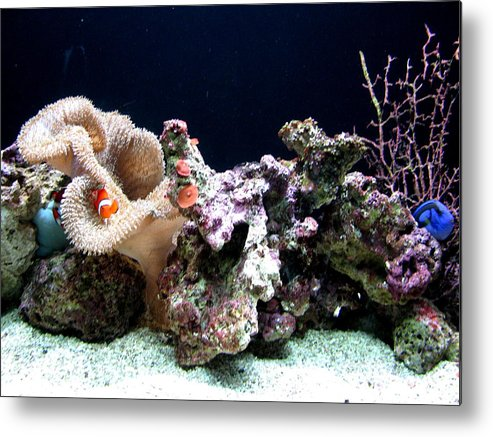 Fish Metal Print featuring the photograph Clown Fish Reef by Jess Thorsen