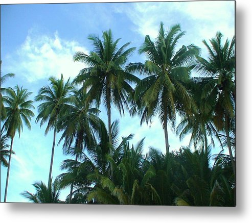 Coconut Metal Print featuring the photograph Coconut Trees by Nicholas Lim