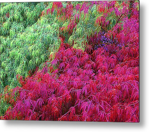 Tree Metal Print featuring the photograph Colored Leaves by John Toxey