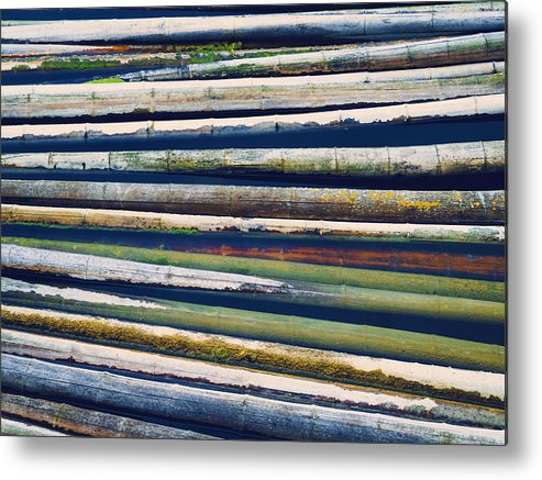Bamboo Metal Print featuring the photograph Colorful Bamboo by Wim Lanclus
