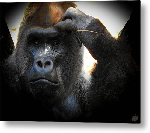 Gorilla Metal Print featuring the photograph Cousin, No. 35 by Elie Wolf