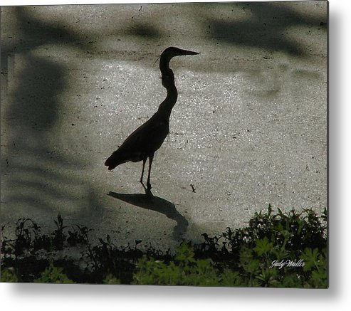Bird Metal Print featuring the photograph Crane Reflections by Judy Waller