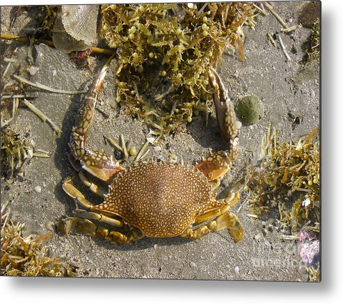 Nature Metal Print featuring the photograph Creatures Of The Gulf - Taking Shore Leave by Lucyna A M Green