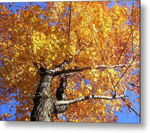 Trees Metal Print featuring the photograph Crown Fire by Dave Martsolf