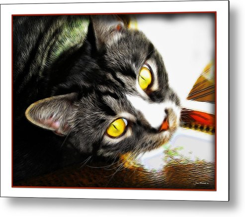 Cat Metal Print featuring the photograph Curiousity by Joan Minchak