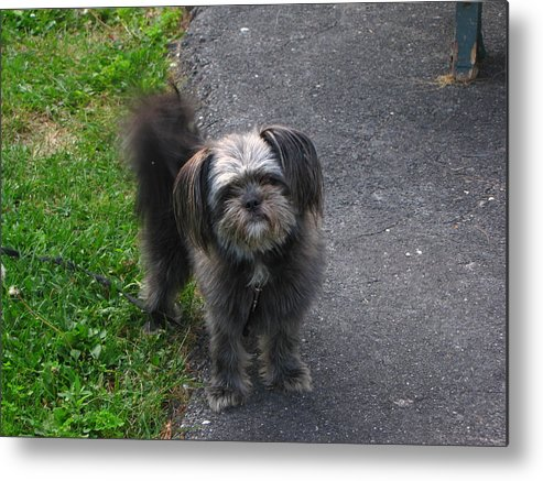 Dog Metal Print featuring the photograph Cute Dog by Melissa Parks