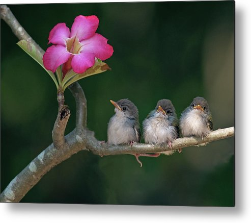 Horizontal Metal Print featuring the photograph Cute Small Birds by Photowork by Sijanto