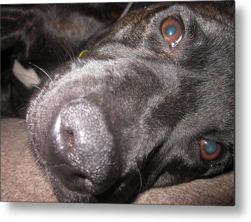 Metal Print featuring the photograph Daisy Dog by Miss McLean