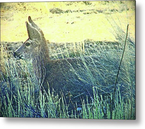 Abstract Metal Print featuring the photograph Deer Lying Down by Lenore Senior