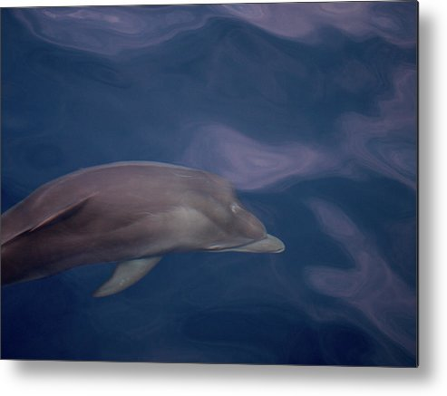 Valasretki Metal Print featuring the photograph Delphin 9 by Jouko Lehto