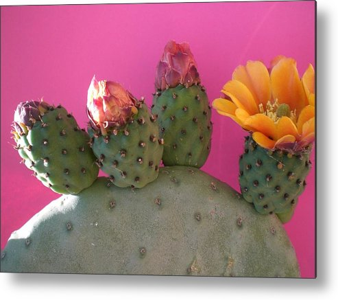 Cactus Metal Print featuring the photograph Desert Jewels IIi by Aleksandra Buha