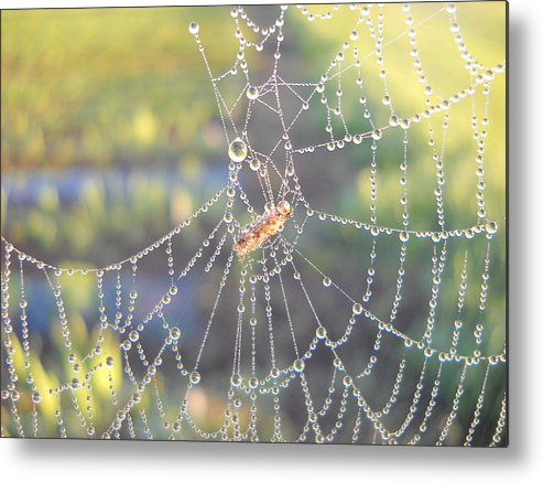 Morning Dew Metal Print featuring the photograph Dew Drops On A Spider Web by Kent Lorentzen