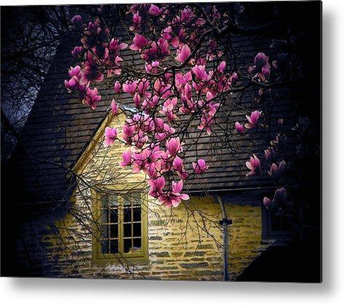 Flowers Metal Print featuring the photograph Dogwood By The Window by Joyce Kimble Smith