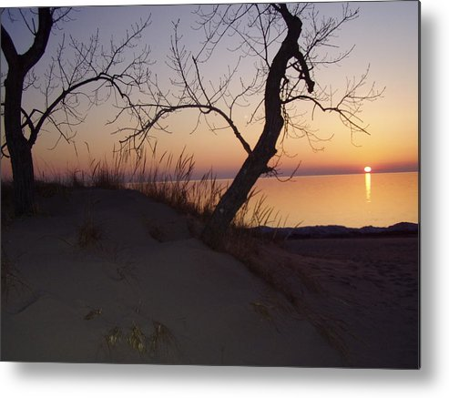 Sunset Metal Print featuring the photograph Dragon Tree At Sunset by Sylvia Wanty