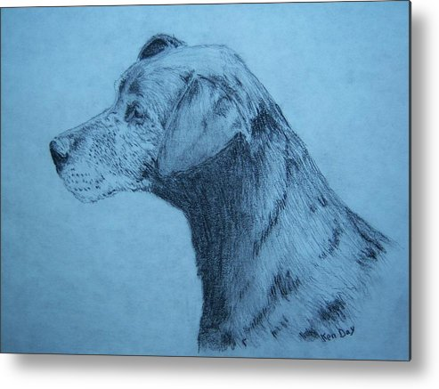 Dog Pet Friend Metal Print featuring the drawing Dudley by Ken Day