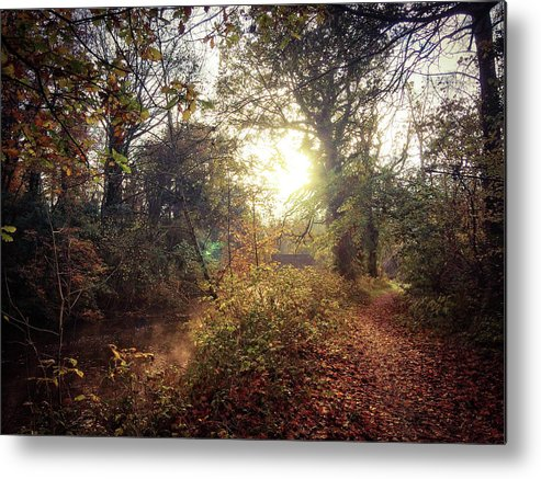 Irish Landscape Metal Print featuring the photograph Dunmore Wood - Autumnal Morning by Andy Walsh