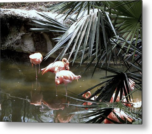 Flamingos Metal Print featuring the photograph Everyone In The Pool by Terri Mills