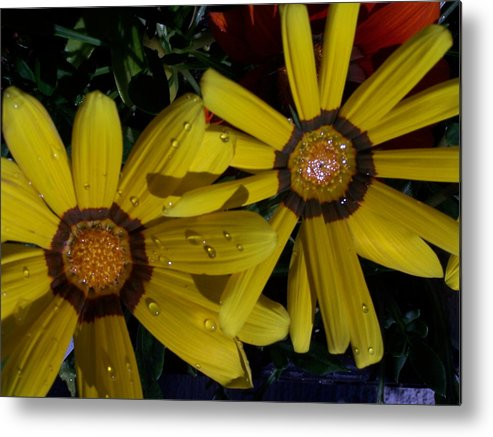Flowers Metal Print featuring the photograph Eyes For You by Vijay Sharon Govender