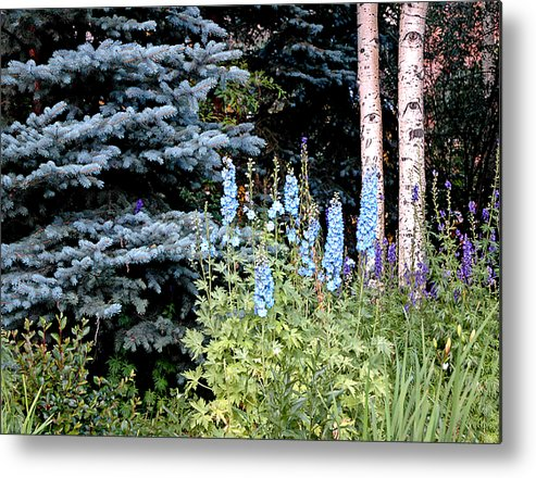 Trees Metal Print featuring the photograph Eyes On Blue by Jenna Cornell