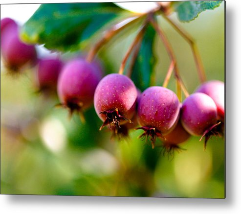 Berry Metal Print featuring the photograph Fall Berries by Marilyn Hunt