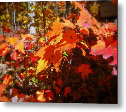Red Metal Print featuring the photograph Fall Color 2 by John Julio