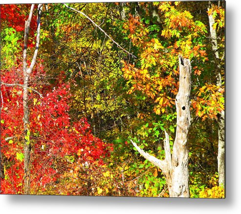 North Carolina Metal Print featuring the photograph Fall Colors by April Camenisch